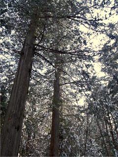 hike2006-02-21c