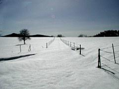 pasture01