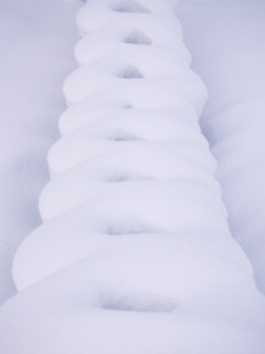 Snow200701